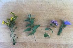 Pflanzen aller Art kann man pflücken...