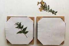 Auch zarte Pflanzenteile wie die Blüten der Brennnessel bleiben erhalten.