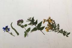 Die vier Pflanzen aus meinem Garten...